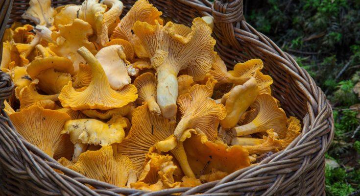 wieviele pilze darf man sammeln