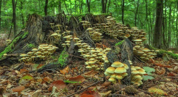 pilze natur